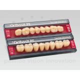 Sr Orthosit Pe Posteriores (molares Inferiores)