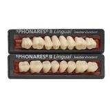 Sr Phonares II Posteriores (molares Inferiores)