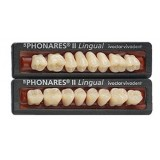 Sr Phonares II Posteriores (molares Superiores)