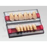 Sr Vivodent Chromascop Anteriores (dientes Superiores)