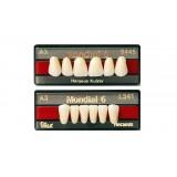 Mondial Anteriores (dientes Inferiores)